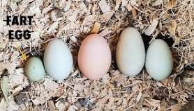 Image result for egg starts when a yoke that conta