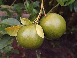 Create Small Fruit Trees With This Pruning Method  Organic Can You Prune Fruit Trees In The Summer