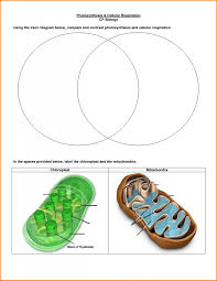 Venn Diagram Of Mitochondria And Chloroplasts Venn Diagram Of Photosynthesis And Cellular Respiration