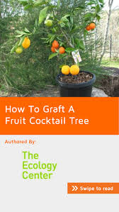 dwarf fruit cocktail trees. Delighful Cocktail How To Graft A Fruit Cocktail Tree Cover Throughout Dwarf Trees