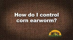 Corn Earworm Control Q A How Do You Control Corn Earworm