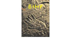 Amazon.co.jp: BIMP (English Edition) eBook: Davis, Abe, Griffith, Tonya:  Kindle Store