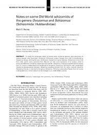 essay structure analysis ib