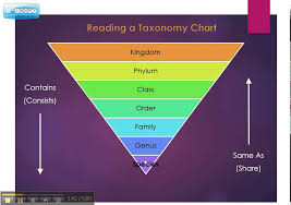 Taxonomy Chart Explained