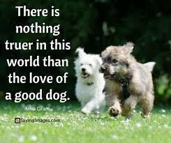 Quotes About Dogs Inspiration 48 Dog Quotes For People Who Love Dogs SayingImages