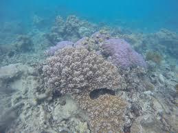 Coral Reef Essay Handyman Caretaker Cover Letter