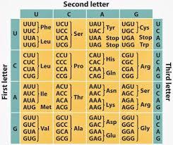 Genetic Code Live Flashcards Quizlet