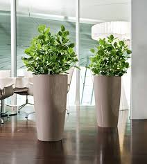 office pot plants. lechuza rondo pot plantsedible office plants i