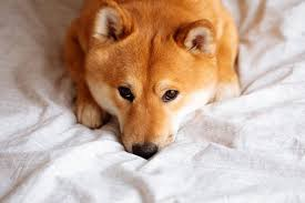 Dogecoin Is Crashing: Is Now the Time to Invest?   Personal Finance    mcdowellnews.com