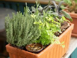 Decoration : Indoor Garden Planter Boxes Long Herb Planter Hanging Kitchen  Herb Garden Kitchen Herb Garden Diy Kit How To Grow Herbs At Home Indoor ...
