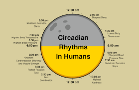Quotes About Circadian Rhythm 30 Quotes