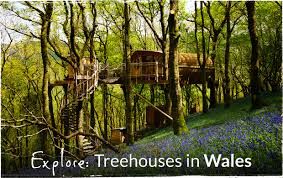 Glamping In Tree Houses  Go GlampingTreehouse Accommodation Ireland