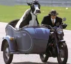 Mucca Sidecar