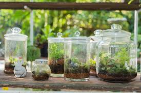 large glass jars with lids give you the option of having sealed and unsealed terrariums
