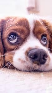 Cute Dog Wallpapers (61+ best Cute Dog ...