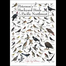 Birds Of Seattle And Puget Sound Chris Fisher 9781772130195 Backyard Birds Pacific Northwest