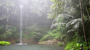 tropical rainforest raining.  Tropical Intended Tropical Rainforest Raining O