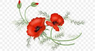 poppy drawing flower clip art vector
