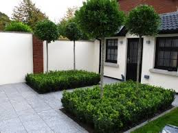 bay trees in box hedge front garden