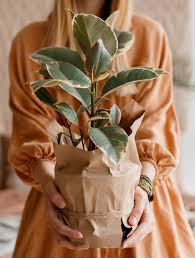 can you leave a plant in the container