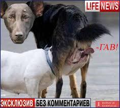 """За выкрик в адрес Порошенко охрана удалила российского пропагандиста, а неадекватный персонаж из """"Лайфнюс"""" начал лаять - Цензор.НЕТ 7869"""