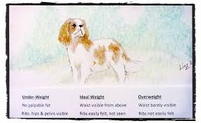 Cavalier Weight Chart Is Your Cavalier Overweight I Love Cavaliers Com