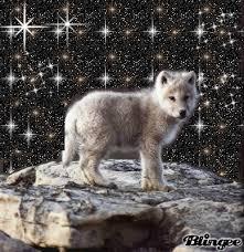baby wolf.  Wolf Baby Wolf Throughout Baby Wolf