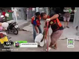 Resultado de imagem para HOMEM É PICADO NO ÓRGÃO GENITAL POR COBRA AO USAR BANHEIRO PÚBLICO