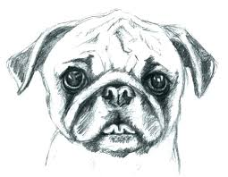 pug coloring pages printable pug coloring pages pug puppy coloring pages pug puppy coloring pages pug pug coloring pages