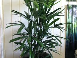 modern office plants. Modern Office Plants Large Size Of Ravishing Indoor Health Archives Home Design With Black Magnificent . W
