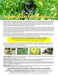 diatomaceous earth fleas yard in making flee naturally flyer flea treatment diatomaceous earth fleas yard