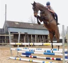 Image result for horse jump fails photo