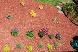 creating a planting bed and choosing