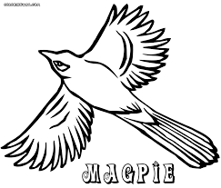 Small Picture Magpie coloring pages Coloring pages to download and print