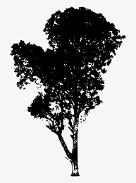 Uqyeyyrrtree Vector Png Download Tree Silhouette Transparent Png