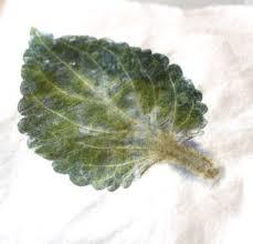 and then i tried a fern leaf hammered fern