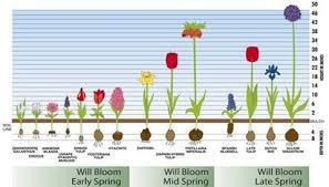 2 Planting Charts Fall Marlboro Bulb Company