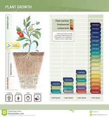 Plant Growth Stock Vector Illustration Of Fertilizing