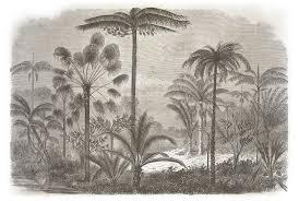 Zuid Amerikaanse Jungle Met Palmbomen Behang Op Maat Naturalis