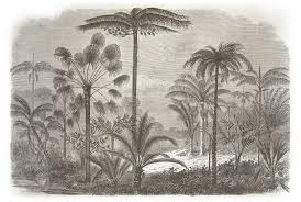 Zuid Amerikaanse Jungle Met Palmbomen Custom Sized Wallpaper