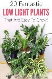 house plants indoor