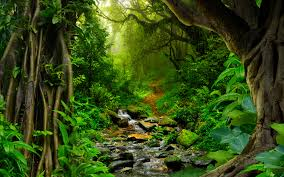 amazon rainforest photos wallpaper wiki
