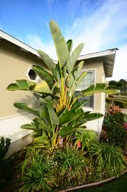 Tropical Plants, Bird of Paradise,
