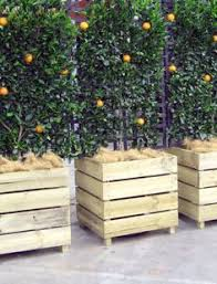 Espaliered fruit trees in wooden boxes- if these were on wheels- you could  use