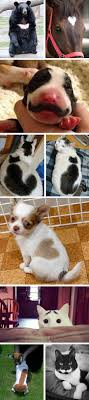 1000 images about Cute Animals on Pinterest