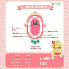 2 Year Old Teeth Chart When Baby Teeth Occurs For Baby Above 1 5 Years Old