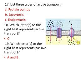 3 Types Of Passive Transport What Type Of Protein Is Involved In Active Transport
