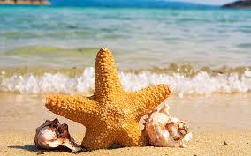 summer ocean beach starfish conch 4k