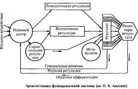 Реферат Строение и функции нервной системы com Банк  Строение и функции нервной системы