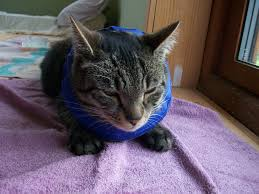 towel e collar for cats image jardimage co